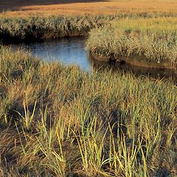 Biddeford, ME. A tidal creek and salt marsh near Biddeford Pool.  TPL project - Anuszewski property.