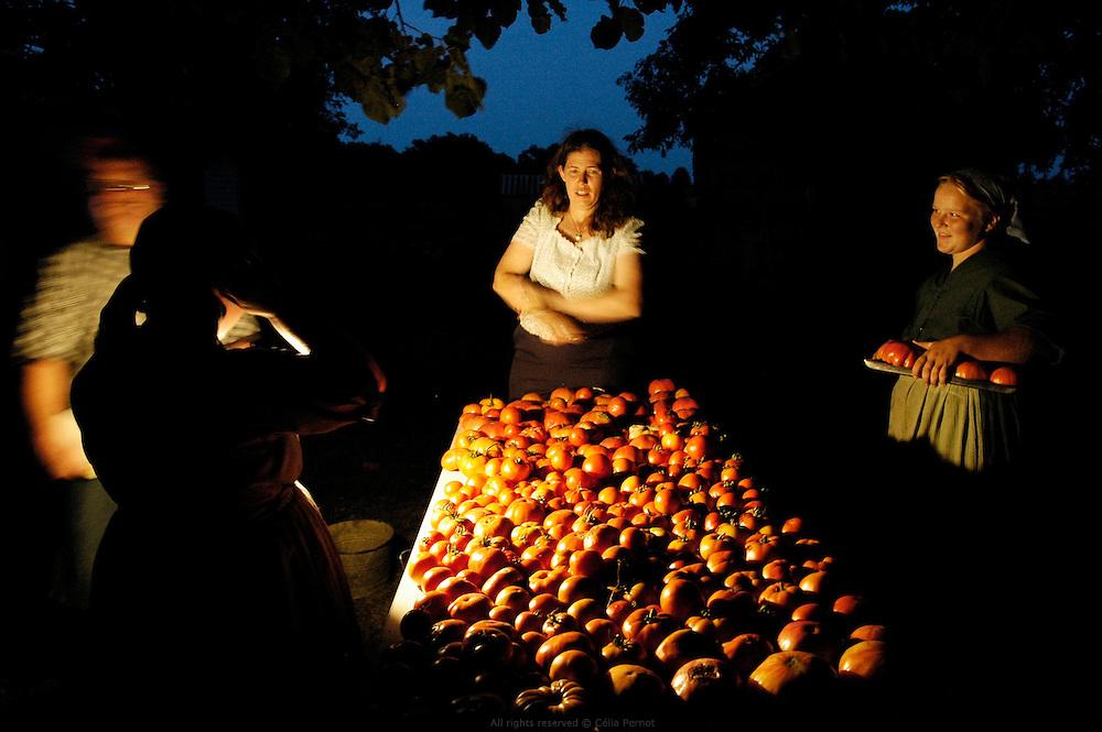 Vente de tomates à la ferme. Les Petersheim, installés comté de Clark depuis quatre générations, ont onze enfants de 5 à 23 ans. Pendant l'été, alors qu'il n'y a pas école, tous prennent part aux activités quotidiennes de la ferme et des récoltes. Sur leur exploitation de 162 hectares, la taille moyenne d'une ferme Amish, ils cultivent de l'avoine, du blé, du maïs, du soja, du sorgo et du millet en suivant des techniques écologiques traditionnelles. Ils ont également 40 chevaux, 25 vaches et un petit élevage de poules et cochons.<br /> <br /> Tomatoes evening sale. The Petersheim, established in Clark county since four generations, have eleven children from 5 to 23 years old. During the summer, whereas the school is closed, all take part in the daily activities of the farm and with harvests. On their exploitation of 162 hectares, average size of an Amish farm, they cultivate oat, wheat, corn, soy beens, sorgo and millet following ecological techniques. They also have 40 horses, 25 cows and a small breeding of hen and pigs.