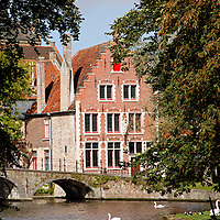 Europe, Belgium, Brugges. Swans on Minnewater lake in Brugges.