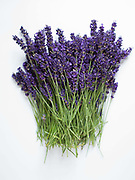 Bunches of lavender harvested from Yorkshire Lavender on 18th July 2017  in Terrington, North Yorkshire, United Kingdom.