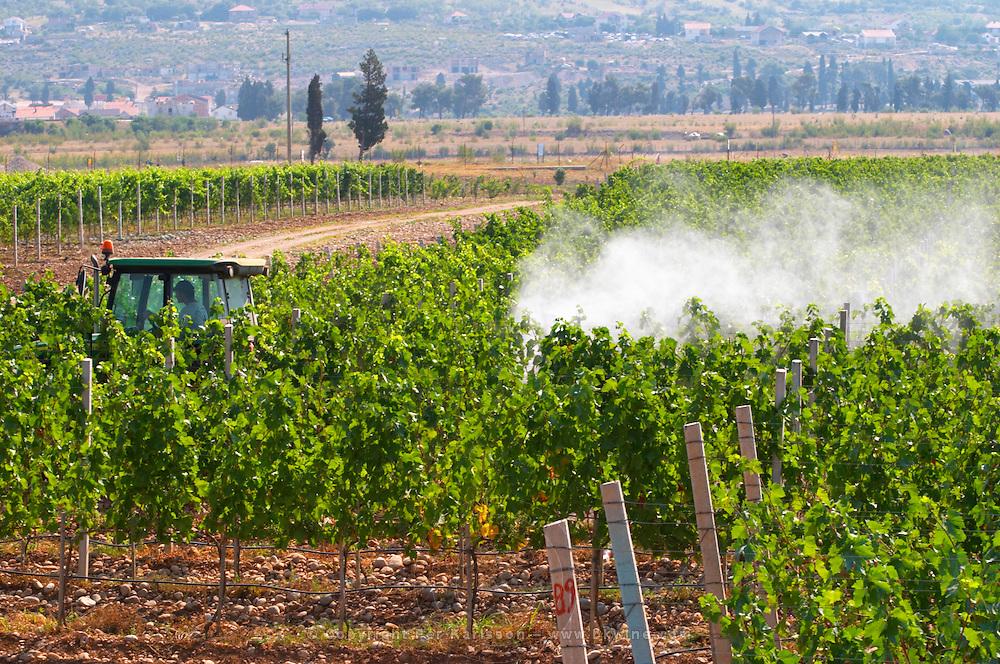 A vineyard tractor spraying with treatment for diseases between the rows of vines. Vranac grape variety. Vineyard on the plain near Mostar city. Hercegovina Vino, Mostar. Federation Bosne i Hercegovine. Bosnia Herzegovina, Europe.