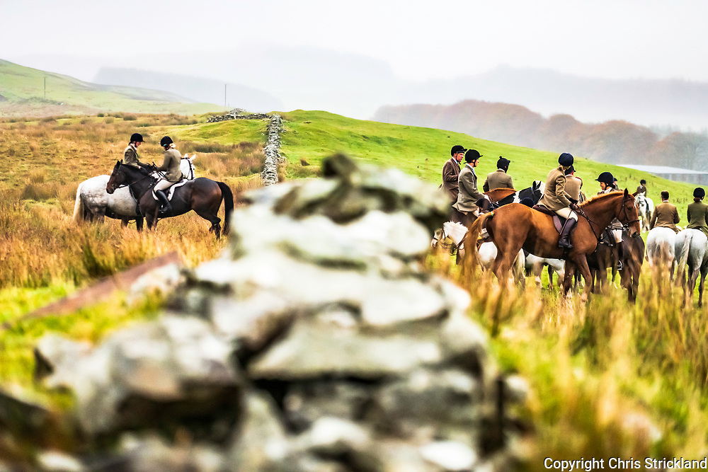 Roberton, Hawick, Scottish Borders, UK. 20th October 2018. The Duke of Buccleuch Hunt flush foxes to guns in the Hawick hills where sheep farming is an integral part of life and dubbed the home of cashmere wool.