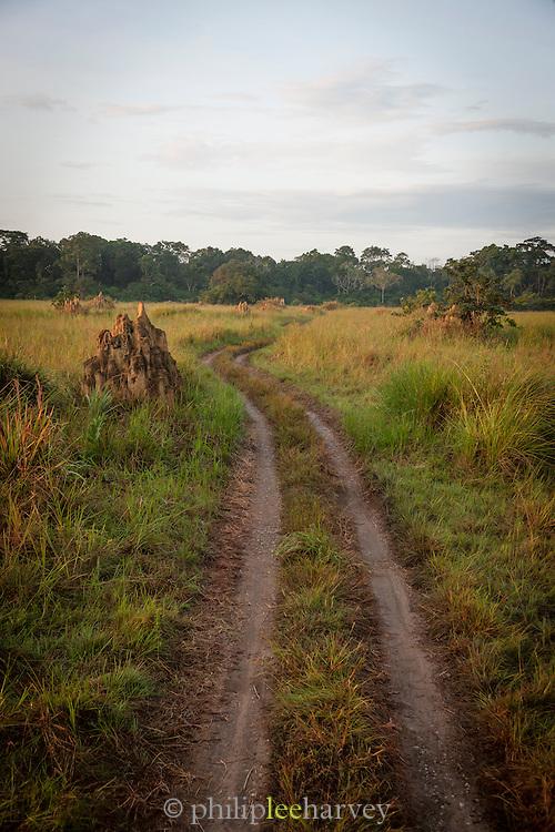 Track through grasslands