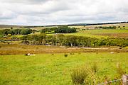 Moorland farming scenery near Princetown, Dartmoor national park, Devon, England, UK