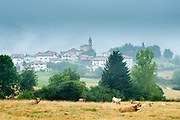Cows in meadow and quaint Basque village of Beintza-Labaien in the mist, Basque Country, Spain