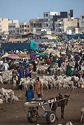DAKAR, Oct. 4, 2014  Photo taken on Oct. 4, 2014 shows the temporary goat market near the Leopold Sedar Senghor Stadium in Dakar, Senegal.  People in Senegal prepared for the Eid al-Adha, which is supposed to fall on Oct. 5 this year in Senegal.(Xinhua/Li Jing) (Credit Image: © Xinhua via ZUMA Wire)