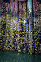 Algea and barnical growth on a ladder at a dock, Port Clyde, Maine.