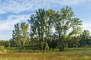 Morning light filters across a quiet meadow forest clearing at Spruce Woods Provincial Park, Manitoba