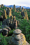 """Chiricahua National Monument, Arizona: The Heart of the Rocks Loop Trail (7 to 9 miles) makes a perfect day hike through the hoodoos here. 27 million years ago, huge volcanic eruptions laid down 2000 feet of ash and pumice in this area, which fused into a rock known as rhyolitic tuff.  Since then this rock has eroded into fascinating hoodoos, spires, and balanced rocks which lie above the surrounding desert grasslands at elevations between 5100 and 7800 feet. At Chiricahua, the Sonoran desert meets the Chihuahuan desert, and the Rocky Mountains meet Mexico's Sierra Madre, making one of the most biologically diverse areas in the northern hemisphere. While we drove the dirt road to nearby Portal, Arizona, Carol saw a mountain lion crossing the road! Other animals here include javelina, coatimundi, bears, skunks, and deer. Published in """"Light Travel: Photography on the Go"""" book by Tom Dempsey 2009, 2010."""