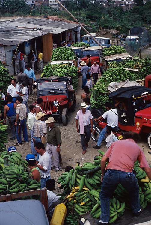 Platanos (sour bananas) are sold at a wholesale market improvised by their farmers in jeeps,Pereira.