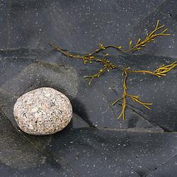 Seaweed and granite on Isle Au Haut in Maine's Acadia National Park.