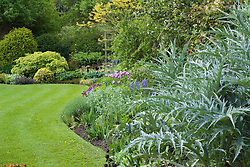 Curving border and lawn with neat, sharp edges at Eastgrove Cottage in spring. Cynara cardunculus - silver cardoon foliage in the foreground