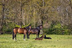 De Brabandere Luc<br /> Stal het Leliehof - Sint Kathelijne Waver 2021<br /> © Hippo Foto - Dirk Caremans<br /> 01/05/2021