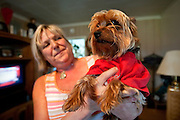 Karen King holds her celebrity three year-old Yorkie, Jordan, in her home on Thursday afternoon.