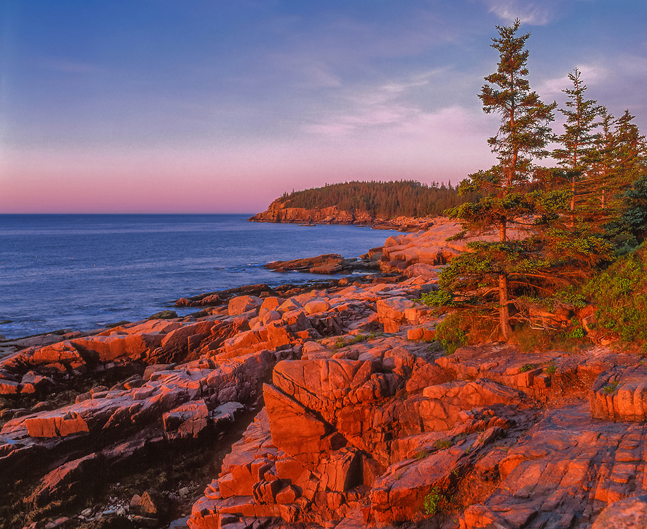 First light on rocky coastline, Otter Cliffs, Acadia National Park, Mt Desert Island, ME
