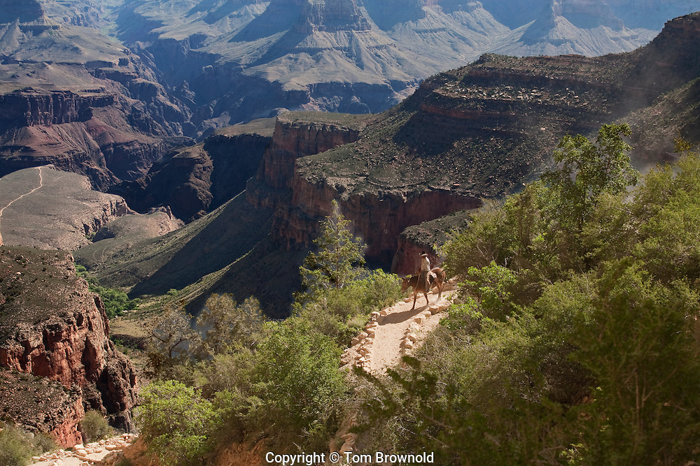 Riding into Grand Canyon on the Bright Angel Trail.