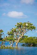 Prek Toal Bird Sanctuary, Tonle Sap Lake, Cambodia