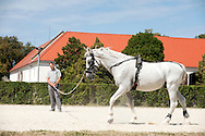 Lipica Stud Farm, Slovenia (August 2016). Lipizzaner horses have been bred at Lipica since 1580. © Rudolf Abraham