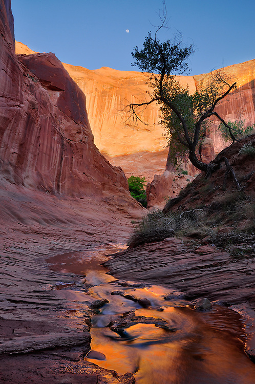 Coyote Gulch, a tributary of the Escalante River in Southern Utah.