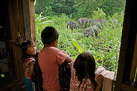 Children peer out the window of their house in amazement at Borneo Pygmy Elephants in the grass of their back yard.  Sukau Village along the Kinabatangan River.  Conflict between humans and elephants is an increasing problem as elephants continue to loose habitat in Borneo.