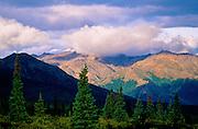 Evergreens & late afternoon light - Chugach Mountains - Alaska