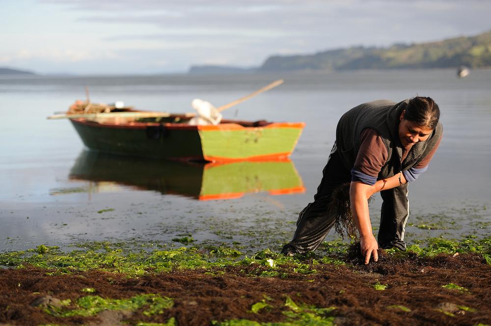 Mujer chilota recogiendo algas / Quemchi, Chiloé. Chile.<br /> <br /> Edición de 10 | Víctor Santamaría.