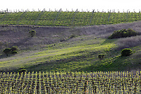 2014 March 20:  Scenic view along the highway Spring in the Napa Valley wine region.  Stock Photos