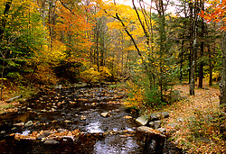 Stock photo of the colorful changing foliage along a Texas hill country river