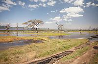 The stunning wetlands of Lake Nakuru National Park, Kenya.