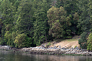 A large Arbutus tree (Arbutus menziesii), also known as the Pacific Madrone, overlooks the shoreline near Burgoyne Bay. Photographed from Daffodil Point in Burgoyne Bay Provincial Park on Salt Spring Island, British Columbia, Canada