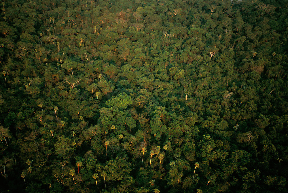 Aerial View, Pantanal, Brazil