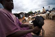 Boy selling sheep in Tamale, Ghana on Sunday June 3, 2007...