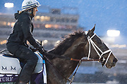 November 1-3, 2018: Breeders' Cup Horse Racing World Championships. Liam the Charmer