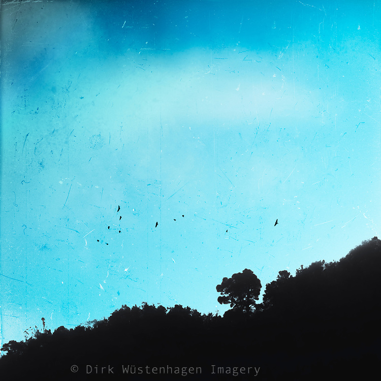 Hill and forest silhouette with a flock of birds