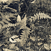 Composite images of the forest from a fairies eye view. A story of texture and patterns as told by the forest environment. Near and far.