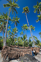 Woman visitors observing ropes with Ti leaves wich was used by ancient Hawaiians for traditional Hukilau fishing method, Coconut Palms, Cocos nucifera, Pu`uhonua o Honaunau or Place of Refuge National Historical Park, Honaunau, Big Island, Hawaii