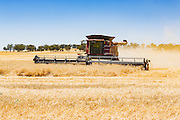 Case combine harvester cutting the last of the wheat crops as the harvest season comes to an end near Gidginbung, New South Wales, Australia <br /> <br /> Editions:- Open Edition Print / Stock Image