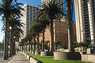 Palm trees ling the sidewalk along the Embarcadero, San Francisco, California