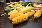 CORN (SWEET), Zea mays Showcase: 'Blue Eyed Blonde'<br />