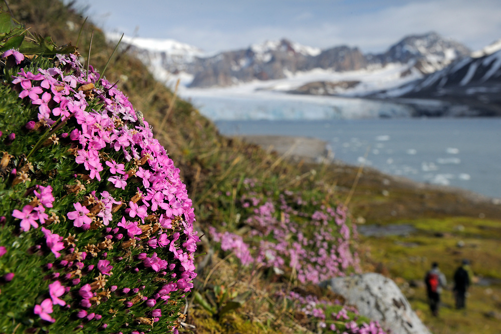 Arctic mountain landscape in summer, Svalbard, Norway