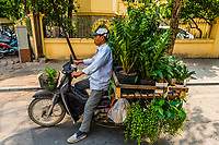 A street vendor sells plants from his bicycle in  Hanoi, northern Vietnam.