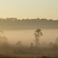 Phu Khieo Wildlife Sanctuary at dawn. Thailand.