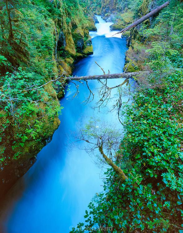 Ohanapecosh River,Mount Rainier National Park, Washington