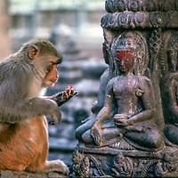 A rhesus monkey sits by Tibetan Buddhist sculptures at Swayambhu Temple in Kathmandu, Nepal.