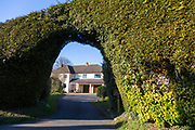 Large hedge forming arched entrance to drive and home,  Cherhill, Wiltshire, England, UK