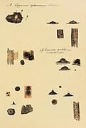 """Hand Painted illustration of North American Fungi from the book 'Icones fungorum Niskiensium' by Schweinitz, Lewis David von, 1780-1834 Publication date 1805. Lewis David de Schweinitz (13 February 1780 – 8 February 1834) was a German-American botanist and mycologist. He is considered by some the """"Father of North American Mycology"""", but also made significant contributions to botany."""