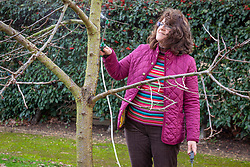 Applying winter wash to a fruit tree with a spray