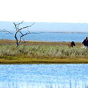 Little Horse Island, South Carolina 2014.