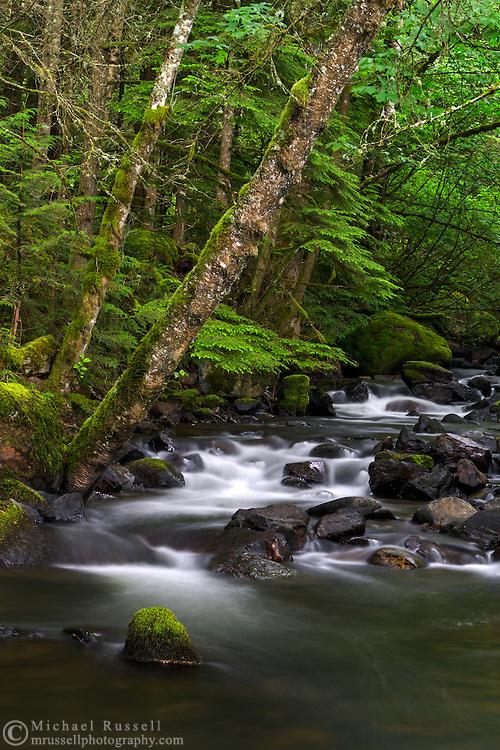 Trout Lake Creek flows through the rainforest at Sasquatch Provincial Park near Harrison Hot Springs, British Columbia, Canada