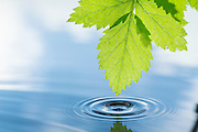 A green leaf and clear reflection in clean water.